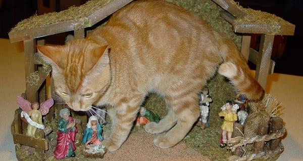 an orange kitten invades a nativity set