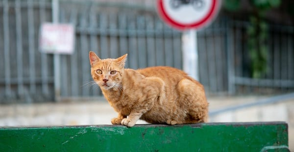 cat on a hot tin dumpster
