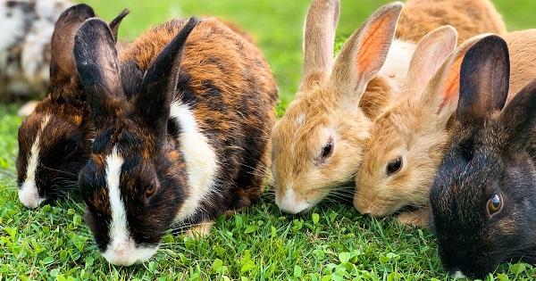 bunbuns on the grass