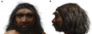 reconstruction of an ancient neighbor of ours