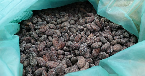 fermented and dried cacao beans