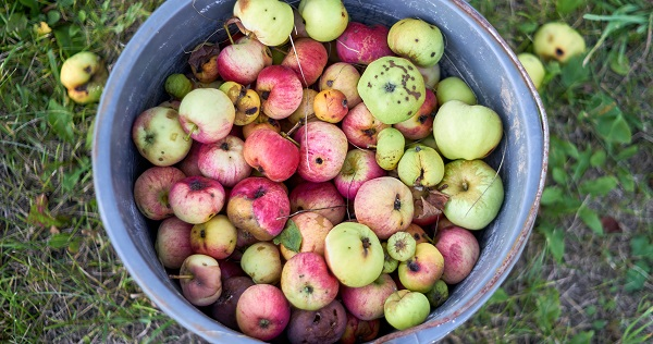 toxic christians fruit inspection: failed