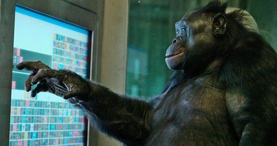 An amazing primate communicator