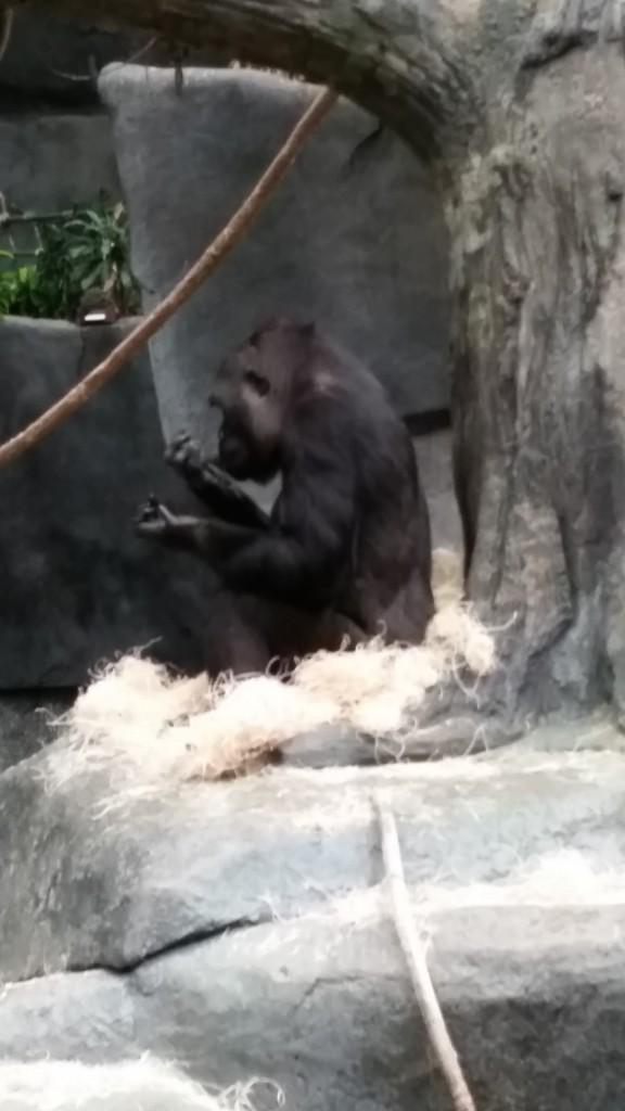 zoo4b2a