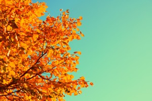 Complimentary Autumn Colors by D Sharon Pruitt via Creative Commons
