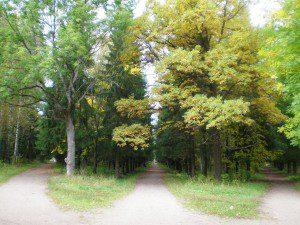 Sylvia_park._Intersection_of_three_roads
