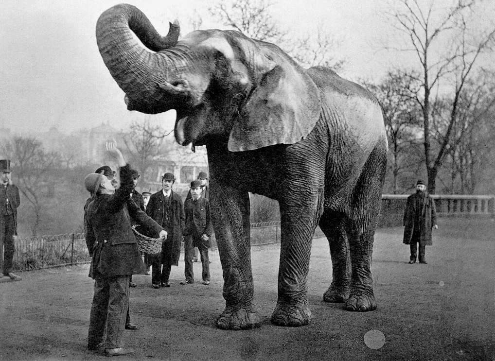 one-of-the-most-famous-elephants-in-the-world-arrived-in-new-york-132-years-ago-today.jpg