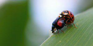 ladybug-188019_1280