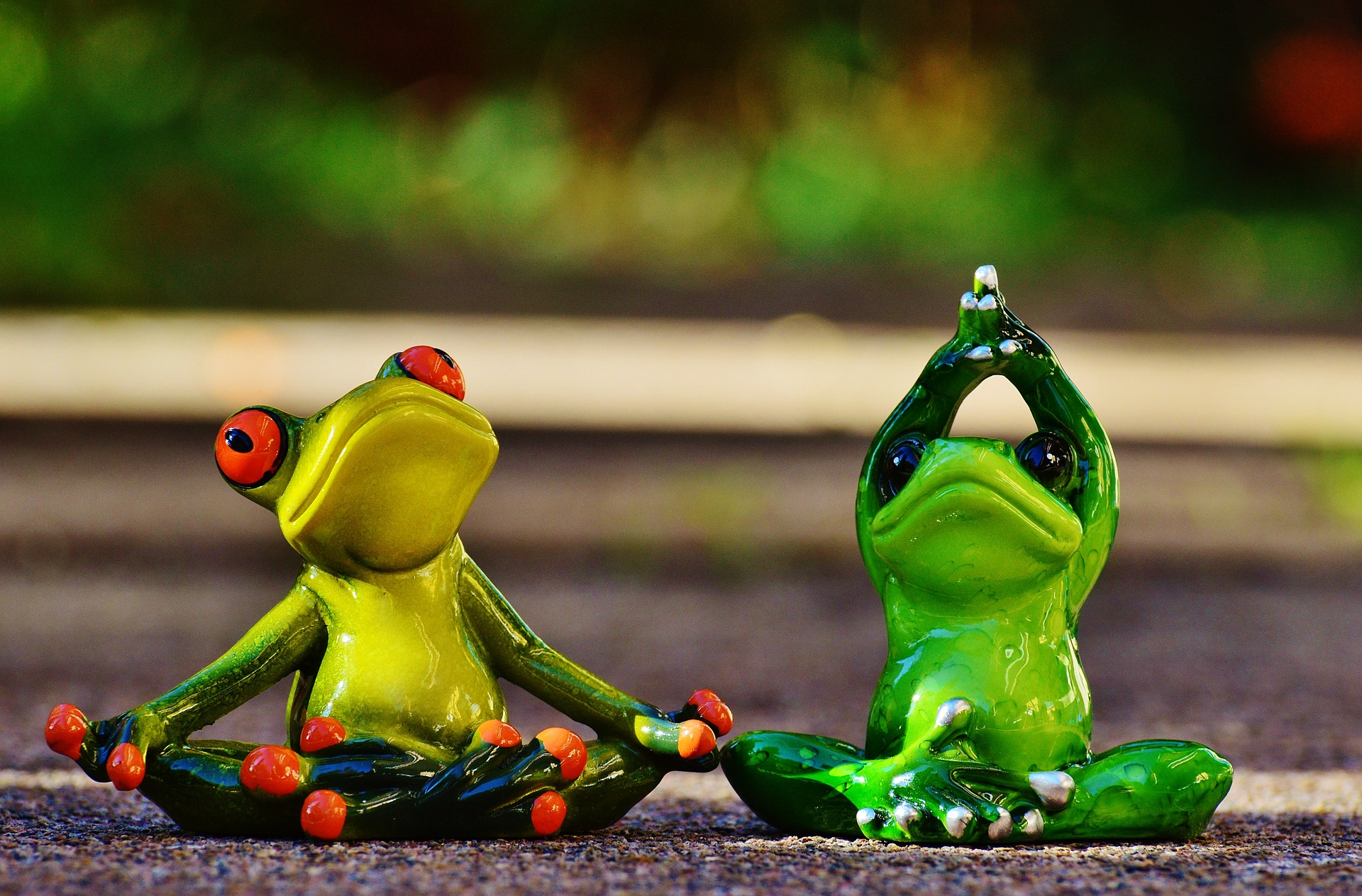 frogs-1030284_1920