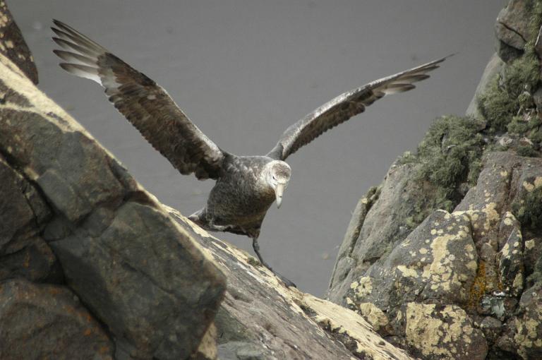 albatross-415217_1920