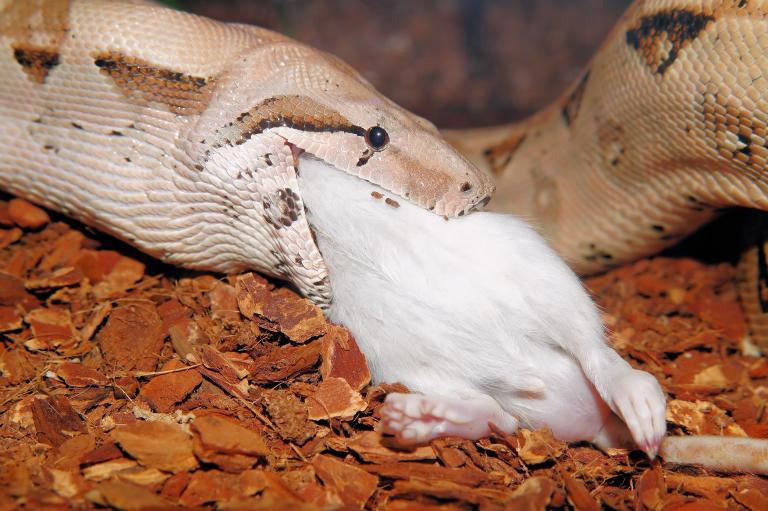 snake-829648_1920