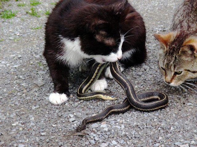 mini and snake