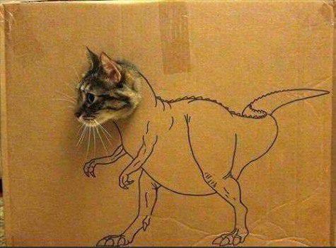catosaurus