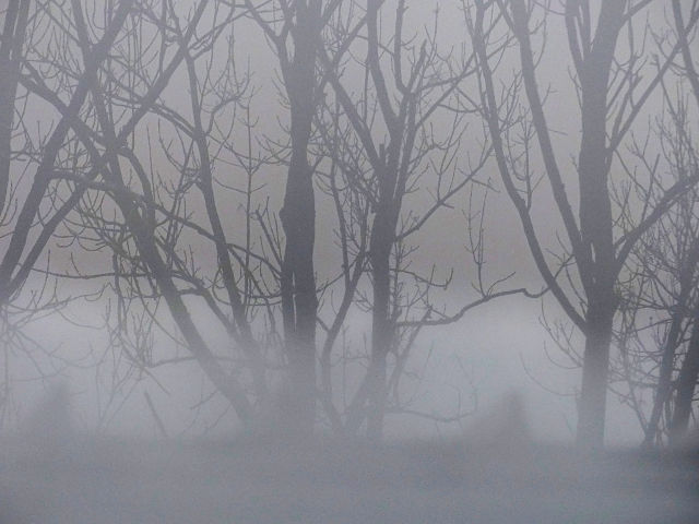 FogAustria
