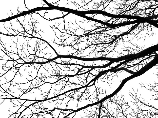 TreeDenominations