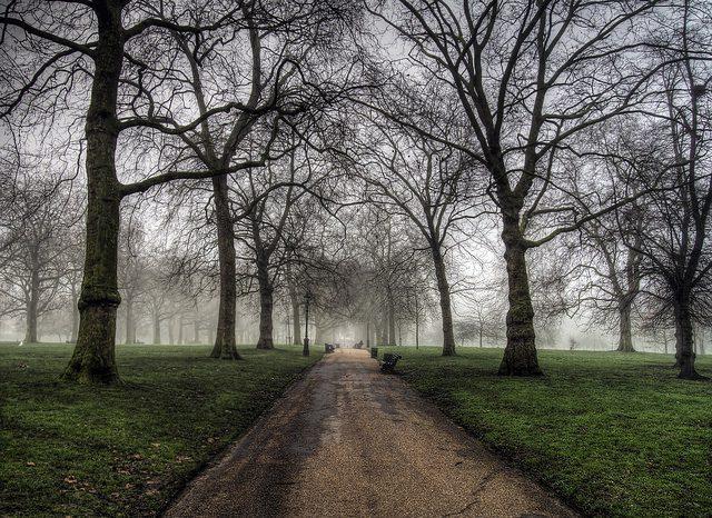 Fog in Green Park, London. Photo: Neil Howard.