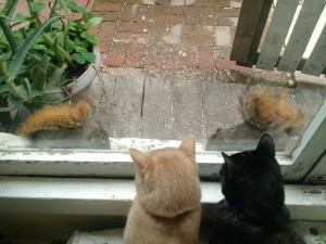 """My housemate likes to """"seed the stage"""" for the bird and squirrel """"actors"""" on our communal """"cat TV"""""""