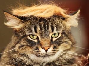 Trump cat pic