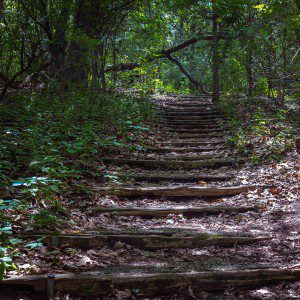 trail-stairs-cindee_re