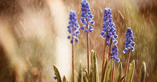 raise your words, flowers under rain