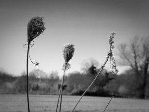 field-flowers-1881652_960_720