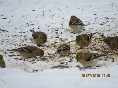 Epiphany 6  Winter Finches