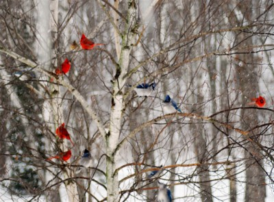 Epiphany 6  winter jays andcardinals