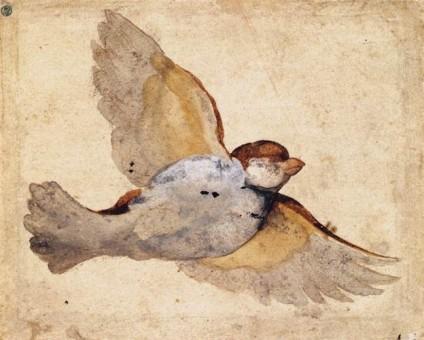 Replace 26  Study of a Flying Sparrow, Giovanni_Da_Udine, 1415-1420, National Museum of Art, Stockholm, Vanderbilt