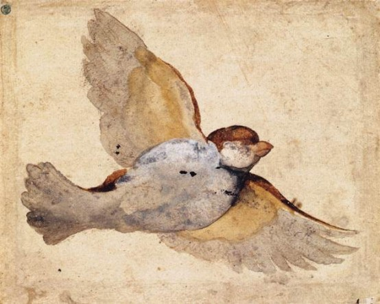 Giovanni_Da_Udine. 1515-20. Study of a Flying Sparrow. National Museum of Art, Stockholm. Vanderbilt
