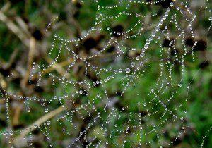 spider-web-974705_1920