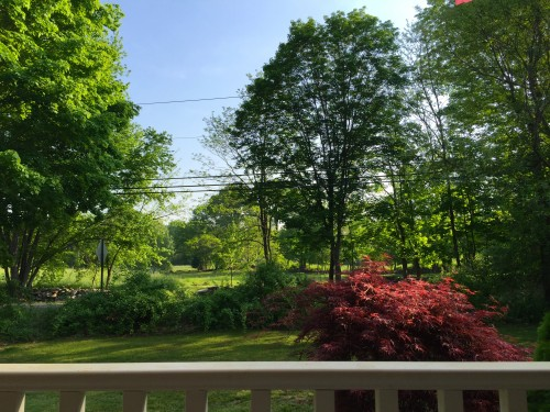 The view from my porch, May 27, 2016. (The field across the way belongs to one of my parishioners.)