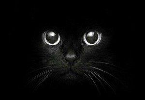 animal-awesome-big-eyes-black-Favim.com-2162031