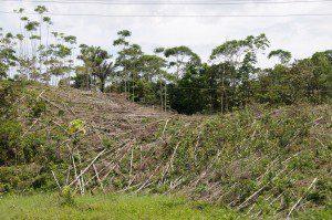 Deforestation in Ecuador, Alan, Flickr.com, Attribution 2.0 Generic (CC BY 2.0)