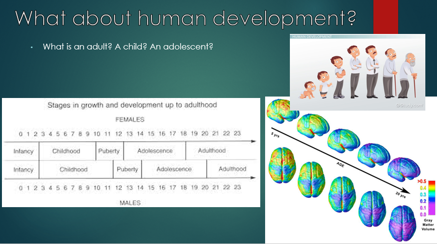 The simplified development of a human.