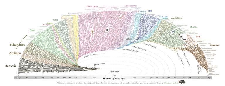 tree life evolution