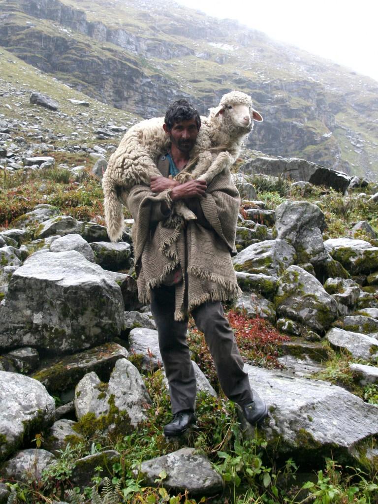 Himalayan Shepherd (photo by Raja Selvaraj, Wikimedia Commons)