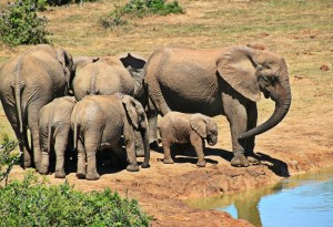elephant-1092508_1920