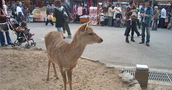 deer05