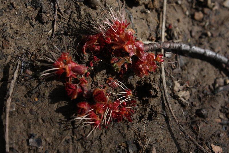Broken_flower