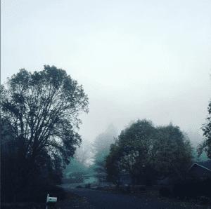 Fog Scene CDP