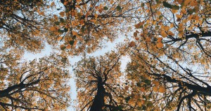 Photo by Oli Gibbs from Unsplash. Because there is a lot of tree imagery in this novel.