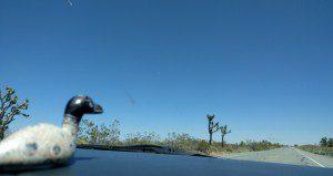 Our roadtrip mascot.