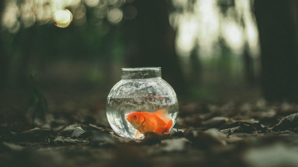 goldfish in a small bowl, in a forest