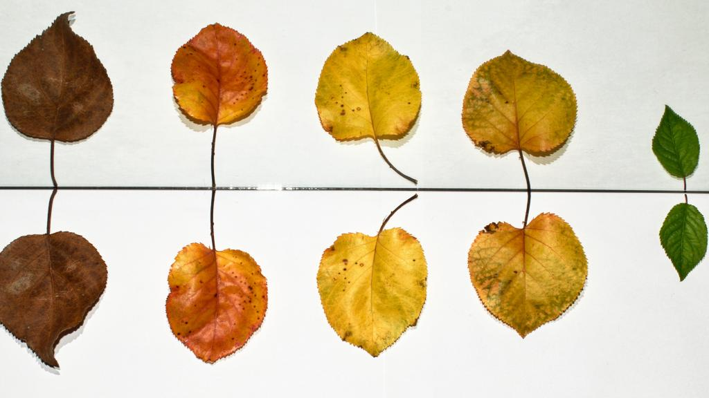 Image of different types of leaves.
