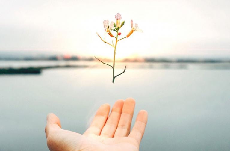 Flower hovering over hand