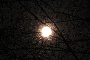 moon-through-branches-1170832_640