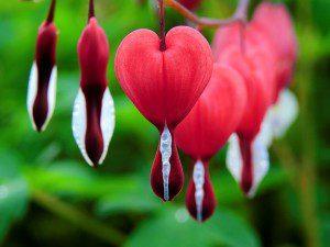 blossom-1425870_640