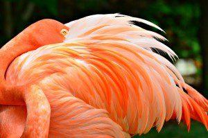 flamingo-1486428_640