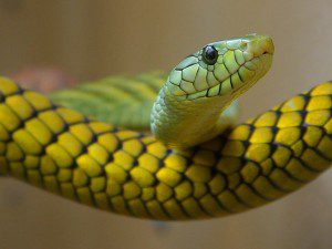 snake-3237_640
