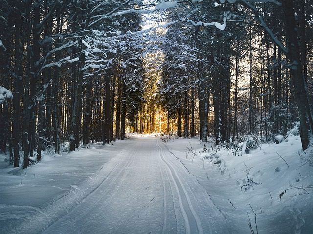cross-country-skiing-2065439_640